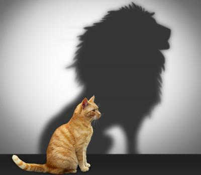 20180110022512-courage-cat-lion152680601-edited.jpg